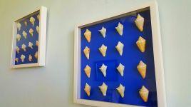 BM 12 - Wall Art of Sea Shells